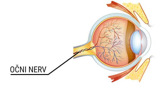 Očni nerv